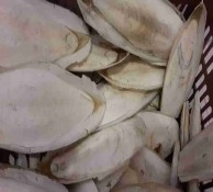 خریدار استخوان ماهی مرکب
